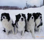 左から ミック(母) サスケ(息子)、コハル(娘)、レック(父)